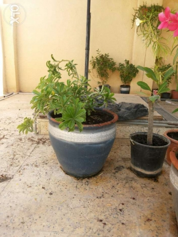 Large collections of different plants 1 to 15 rials السيب -  6