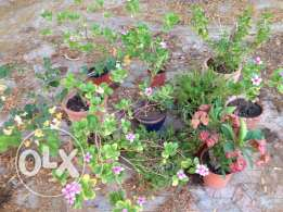 Garden Plants Small to Large Lovely Condition