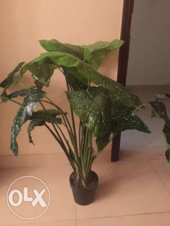 plants decorations مسقط -  2