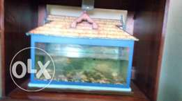 Fish tank.ready to seal .urgent