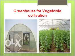 Greenhouse for Vegetable cultivation