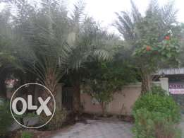 4 + 1 BR Villa with a Large Amazing Garden in Mawalah