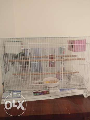 Budgie with cage مسقط -  4