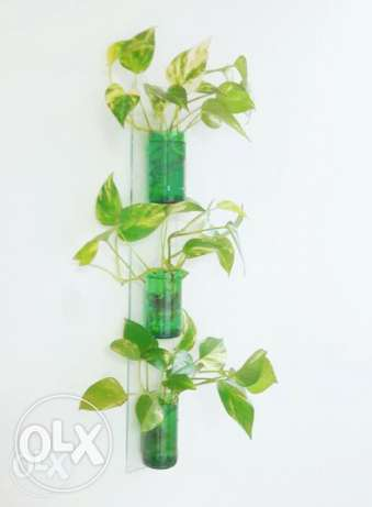 Wall Decorative - Glass Planter - With Money Plant