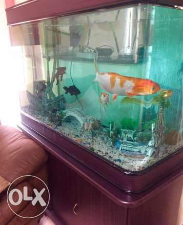 Big Aquarium Tank + 7 Fish + Aquarium Accessories and Decorations