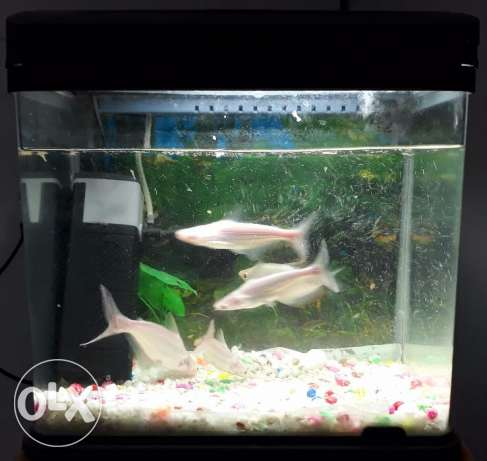 Fish Tank with 5 fish, fish food and accessories