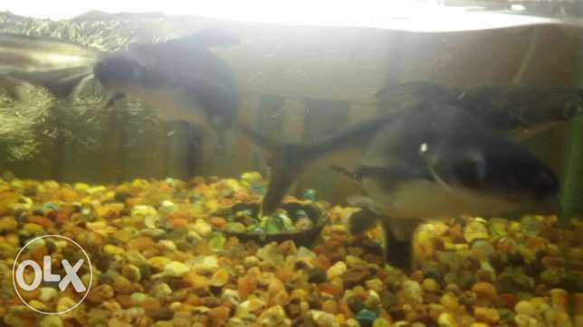 Fish tank with 4 catfish