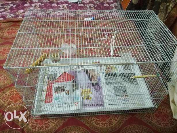 Bird Cage With Food For Sale