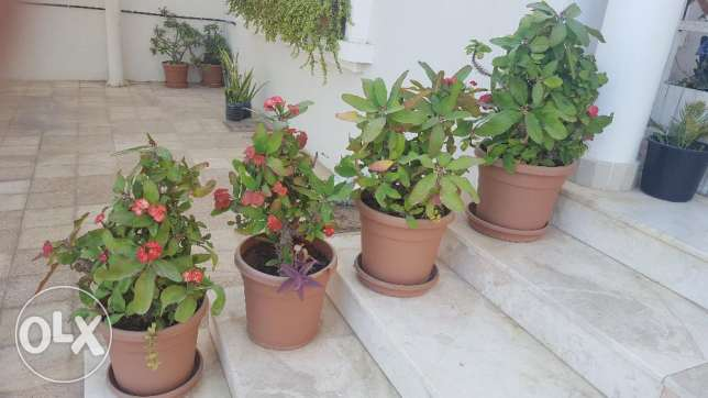Moving Sale: Exotic Indoor & Outdoor plants for sale