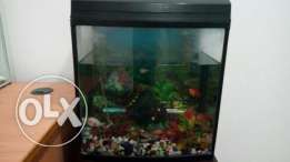 Fish Tanks (Aquarium) with Table For sale 25 OMR