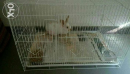 Rabbit with cage