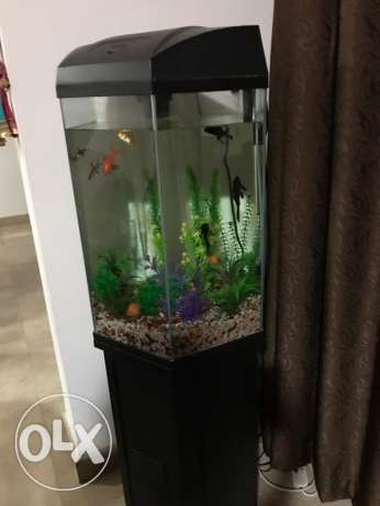 fish tank with gravel, filter, cabinet, fishes not included