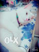 Want to sell my cat urgently bfr 10 december,female cat,very playfull