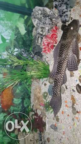 aquarium with .fishes for sale