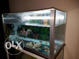 Fish tank sale with Accessories