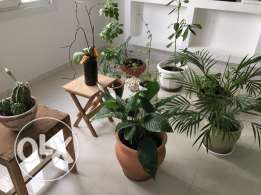 Assorted Indoor potted plants 5-10 RO each