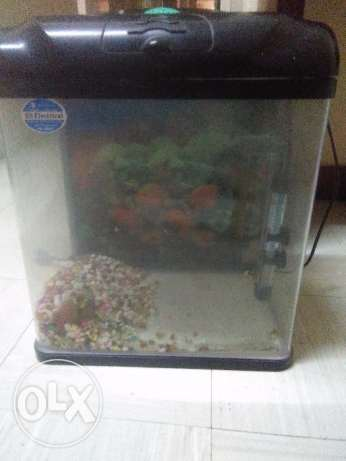 Fish tank for sale مطرح -  1