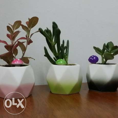 Mini pots for office