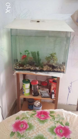 Fish tank with all accessories and stand
