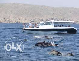 Dolphin Watching Special Offer