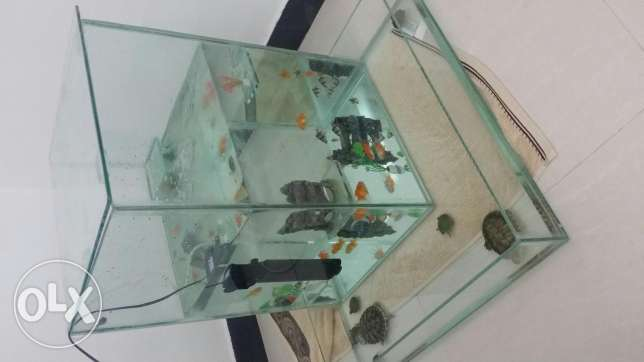 Fishes and Turtles aquarium (2 in 1) - PRICE CHANGED