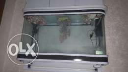 Fish home for sale is very good no any problem same new