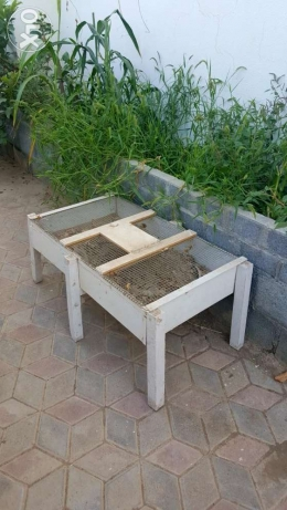 Tortoise's Wooden House For A Pair OR More