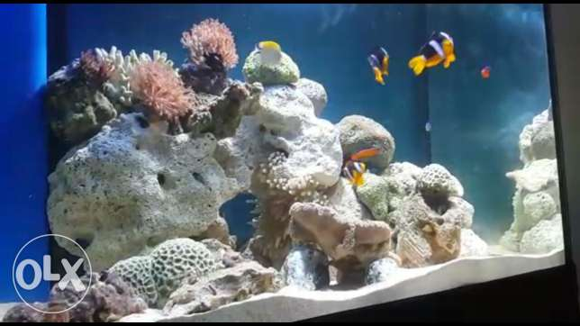 1mtrs length Reef aquarium with skimmer,lights
