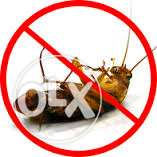DIY Pest Control! Wave Goodbye To Roaches Forever!