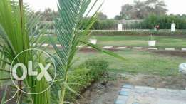 farm for rent in musanaa or sale