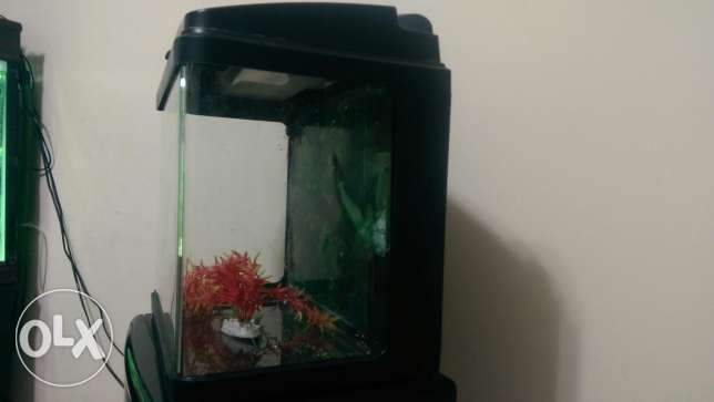 Small Aquarium for sale