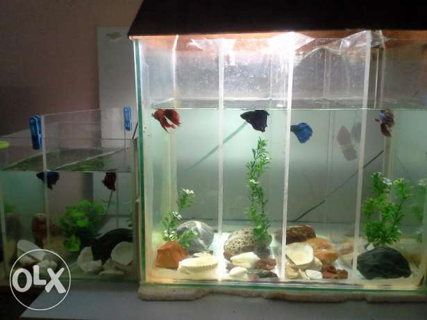 I would like to sell my fighter fishes with tank