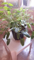 indoor ever green tropical plant