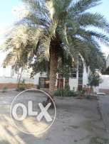 3 BR + Maid's Room Villa with Large Garden in Al Hail North