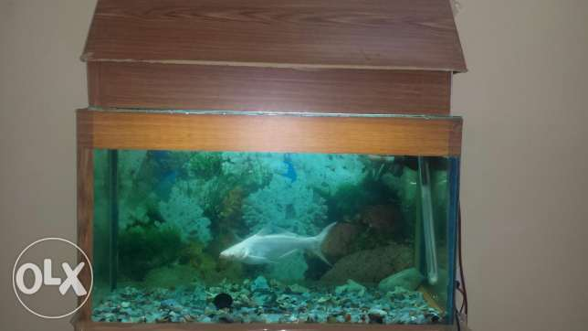 Fish Aquarium with 2 Cat Fishes White
