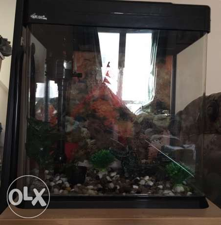 Aquarium with decoration for sale