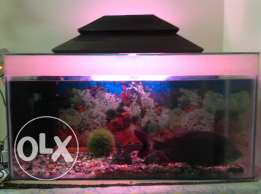Large acquarium in give away price