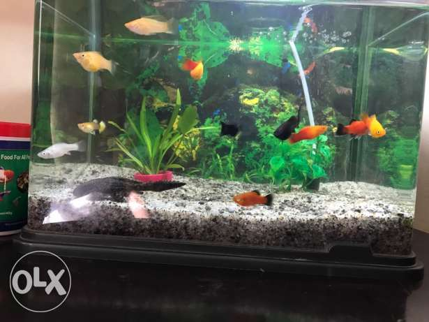 fishes for sale