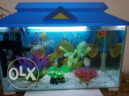 Fish Tank with all accessories & plants
