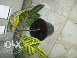 New plant for sale