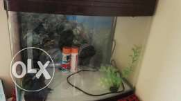 Fish tank with 2 fillters & thermometer available at reasonable price