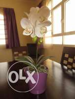 Artificial orchid from Marina Home Interiors with a matching pot.