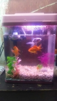 Fish tank for sell with 4 goldfish and 1 turtle
