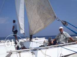Sailing Cat for sale