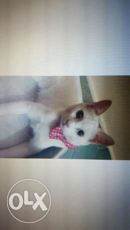 Want urgent home for her before 15th of december pls contact fast! روي -  2