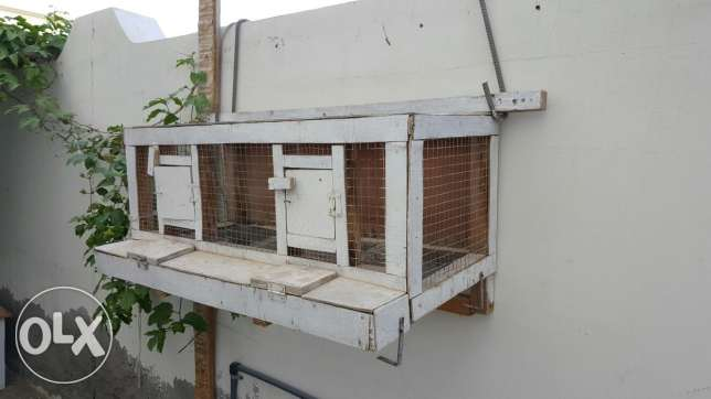Heavy Duty Cage For Eggs Collection Suitable For Chickens or Quail
