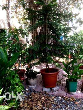 Various organic potted plants