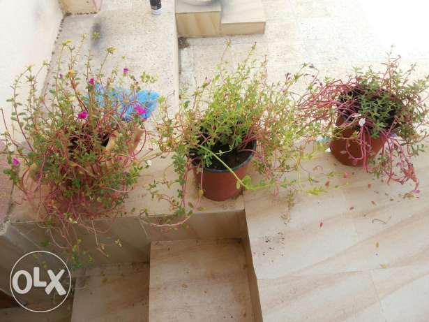 Large collections of different plants 1 to 15 rials السيب -  3