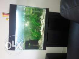 Fish tank with filter and stand