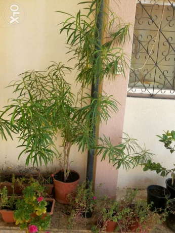 Large collections of different plants 1 to 15 rials السيب -  7